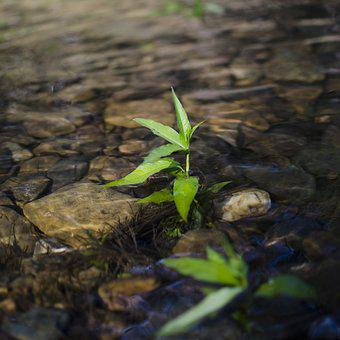 Small Plant, Leaf, River Plant, Plant In The River