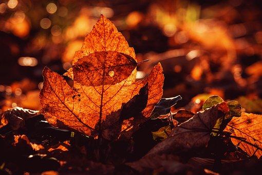 Autumn, Fall Leaves, Leaves, Bright, Orange