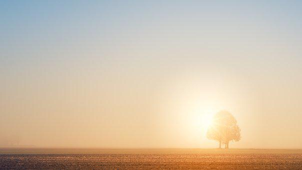 Dawn, Light, Tree, Fog, Blinding, Ray Of Hope