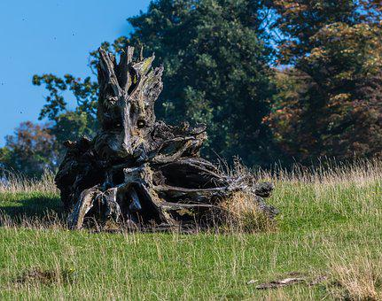 Nature, Trunk, Wood, Dead, Old, Landscape, Decay, Log