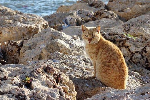 Animal, Cat, Pet, Portrait, Mammal, Eyes, Look