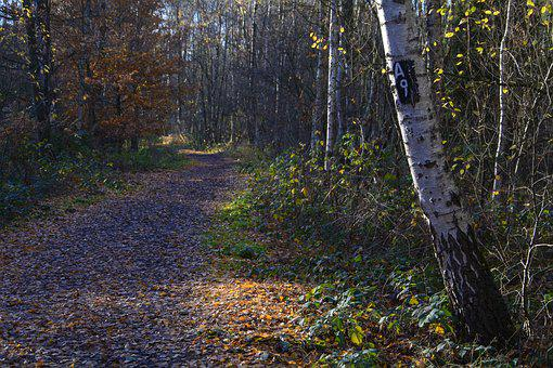 Mark, Marked Trail, A9, Forest, Nature, Hike, Trail