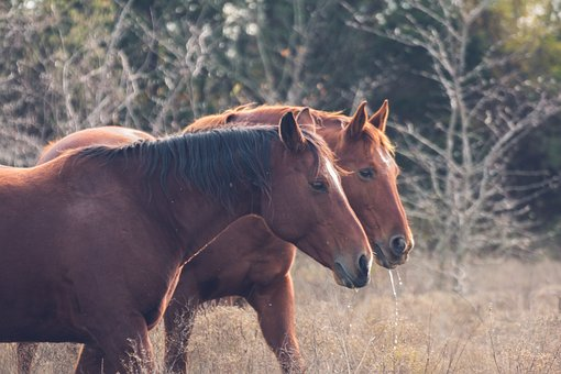 Wild Horses, Nature, Grass, Horses, Mane, Ride
