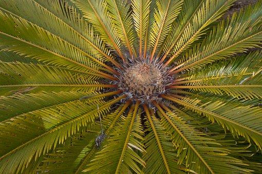 Palm, Unusual, Nature, Flowers, Natural, Strange