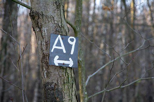 Signpost, A 9, Trail, Away, Hike, Nature, Path, Forest