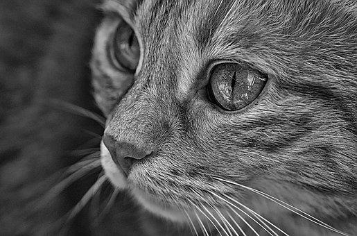 Cat, Pet, Animal World, Portrait, Kitten, Cat's Eyes
