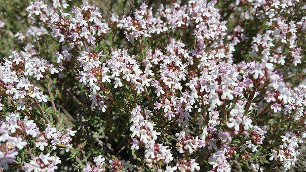 Plant, Nature, Flora, Flowers