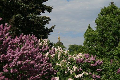 Lilac, Landscape, Sky, Botanical Garden, Vista, Purple
