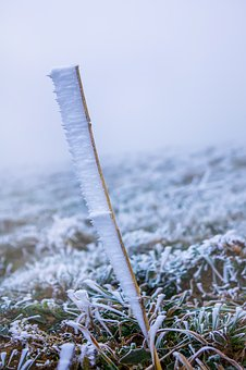 Frost, Fog, Plant, Hoarfrost, Cold, Frozen, Raufrost