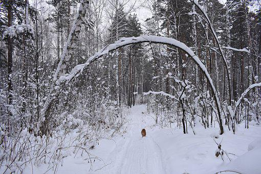 Forest, Snow, Winter, Tree, Crooked, Landscape, Frost