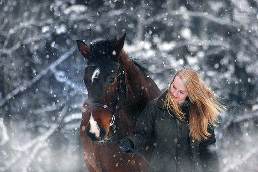 Winter Wonderland, Snow, Snowfall, Xmas, Outdoors