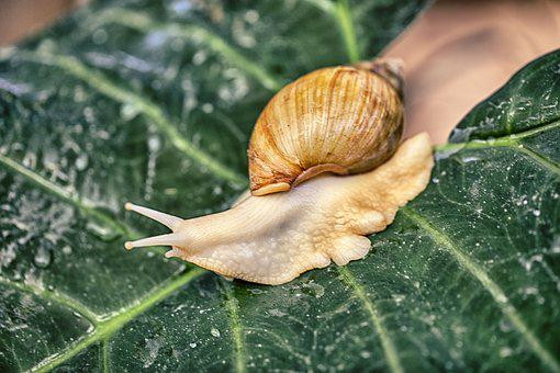 Snail, Nature, Shell, Wild, Animal, Summer, Spiral