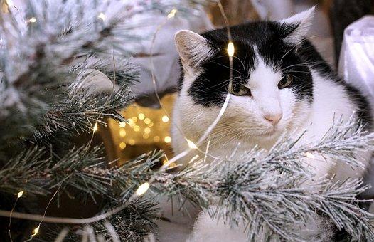 Christmas, Cat, Animal, Sweet, Christmas Celebration