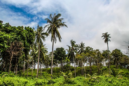 Koh Ianta, Asia, Thailand, Island, Beach, Coast, Tropic