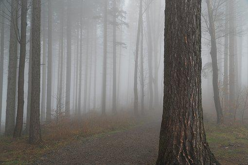 Forest, Tree, The Fog, Autumn, Foliage, Colored, Nature