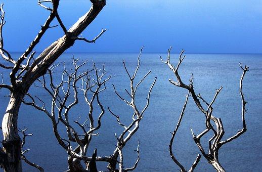 Wood, Tree, Sun, Summer, Nature, Background, Texture