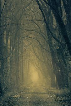 Secret, Forest, Darkness, Nature, Trees, Avenue
