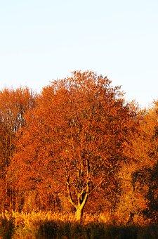 Tree, Warm, Autumn, Nature, Mood, Landscape, Season
