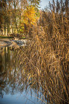 Reeds, Surface, Water, Pond, Reflection, Trees, Bank