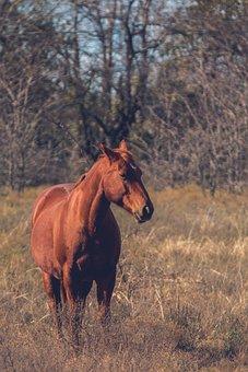 Horse, Wild Horse, Nature, Animal, Wild, Animal World