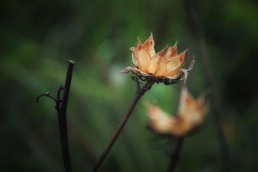 Flowers, Dry, Yellow, Nature