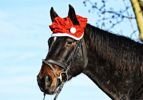 Horse, Christmas, Santa Hat, Funny, Animal, Cute