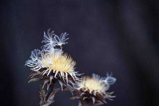 Dry Plant, Nature, Plant, Dry, Flower, Close Up, Autumn