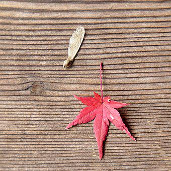 Japan, Toufuku-ji, Maple Leaf, Board, Autumn