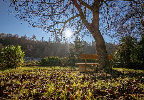 Bench, Nature, Bank, Rest, Landscape, Wood, Out