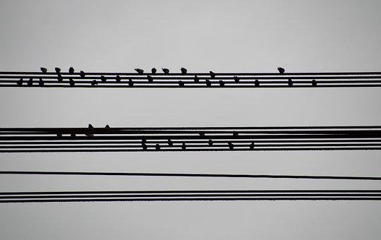 Birds, Wires, Sitting, On The Wire, Houfující, Music