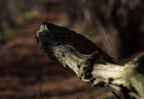 Branch, Wood, Tree, Forest, Autumn, Landscape, Green