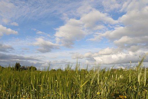 Rural, Field, Campestre