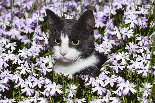 Cat, Domestic Cat, Flowers, Flower Meadow, Meadow