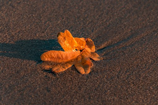 Leaf, Nature, Water, Beach, Autumn, Leaves, Colorful