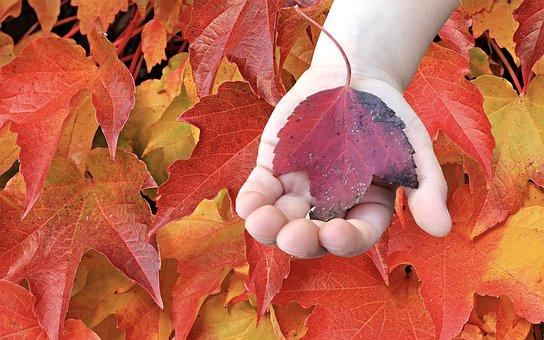 Fall, Leaves, Autumn, Colorful, Nature, Mood, Tree