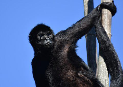 Monkey, Climb, Different Eye Colors, Animal, Nature