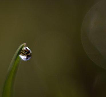 Dew, Drip, Dewdrop, Grass, Blade Of Grass, Green, Macro