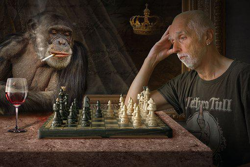 Composing, Monkey, Photomontage, Fantasy Picture, Mood