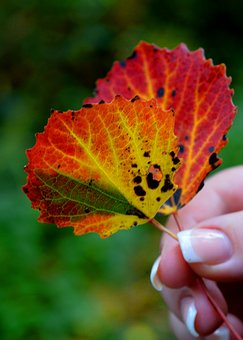 Fall Leaves, Finger, Hand, Autumn Colours, Red, Yellow