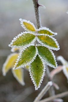 Frost, Ripe, Cold, Freeze, Frozen, Winter, Nature