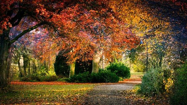 Autumn, Park, Leaves, Nature, Tree, Golden October