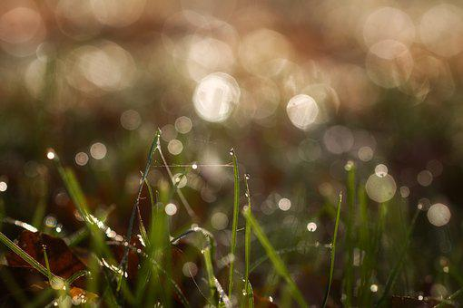 Dew, Rush, Bokeh, Grass, Nature, Drip, Green, Meadow