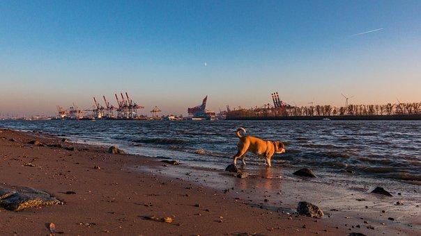 Hamburg, Dog, Animal, Elbe, Maritime, Water