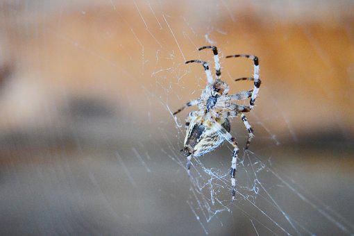 Spider, Spider Web, Insect, Nature, In The Fall Of