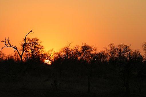 Africa, Sunset, Safari, Landscape, Wilderness