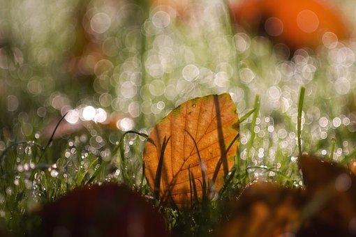 Leaves, Leaf, Bokeh, Dew, Nature, Autumn, Fall Foliage