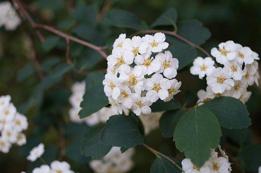 Flower, Light, White, Green, Leaves, Blossom, Bloom