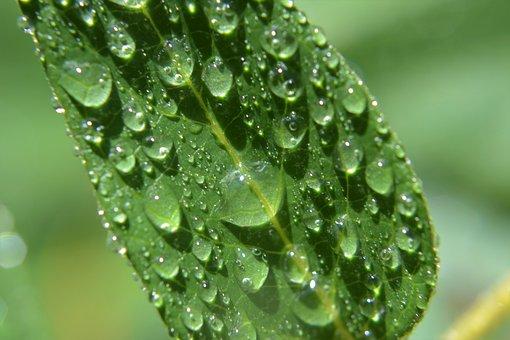 Green, Water, Nature, Macro, Drop