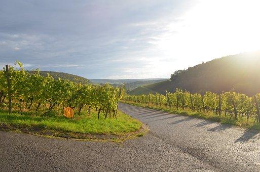 Wine, Sun, Nature, Landscape, Sunset, Sky, Mood, Dusk