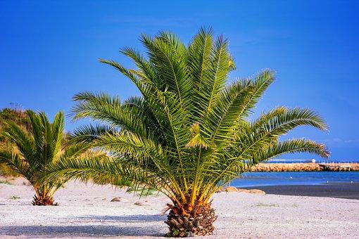 Palm Trees, Beach, North Sea, Denmark, Sea, Sand